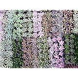 Air Flora Succulent 2