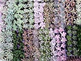 Air Flora Till00033 Succulents, Small, Multicolor