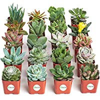 Shop Succulents Planter On Sale from $12.99