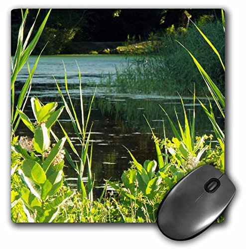 - 3dRose LLC 8 x 8 x 0.25 Inches Mouse Pad, Beautiful Tranquil Pond with Cat O Nine Tails (mp_165204_1)