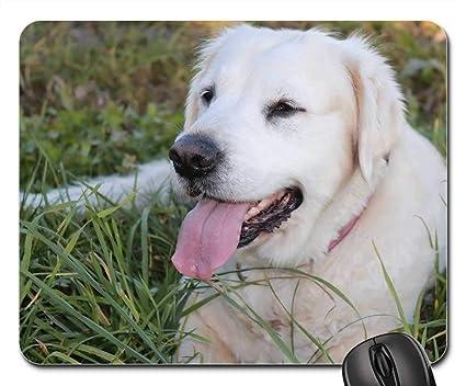 Amazon Com Gaming Mouse Pads Mouse Mat Dog Animal Golden