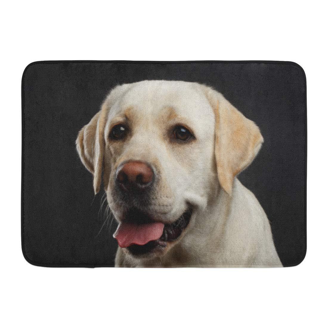 interno Marrone Adorabile ritratto di beige Labrador Retriever Cane Viso curioso di fronte Visualizza animale giallo Bagno Tappeto Tappetino da bagno Zerbini Tappeti da bagno Tappetino da esterno