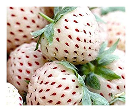 Pictures Of White Strawberries