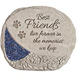 Best Friends Comfort and Light Pet Stone Review
