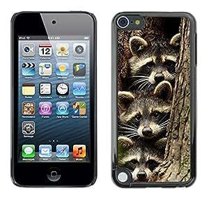FlareStar Colour Printing Cute Raccoon Funny Family Pet Bandit cáscara Funda Case Caso de plástico para Apple iPod Touch 5