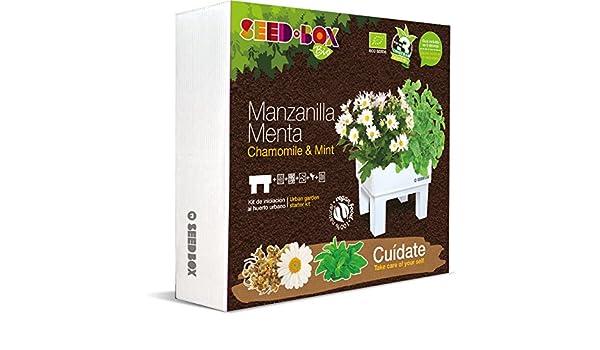 SeedBox SBBICU - Kit huerto urbano de manzanilla y menta: Amazon ...