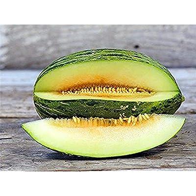 Piel de Sapo Melon Seeds (25 Seeds) : Garden & Outdoor