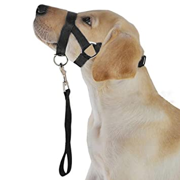 Medium-sized large Dog Explosion-proof Impact Traction Rope Pet Traction Rope