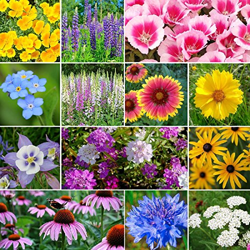 Deer Resistant Wildflower Seed Mix - 5 Pounds, Bulk, Mixed by Eden Brothers