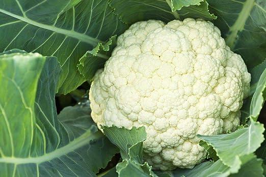 Portal Cool 25 semillas de coliflor Método Bio Semillas de ...