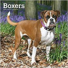 Boxers 2019 Calendar