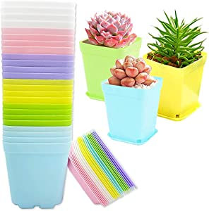 24 PCS 3 Inch Multi Color Square Flower Pots,Seedling Nursery Pots with Saucers,Square Plastic Plant Pots for Home,Company,Office and Garden