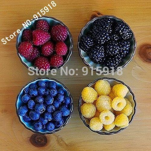 Solution Seeds Farm New Heirloom 800 Seeds Mix Four different varieties of Rare Raspberry seeds variety of choice ( blue, black, red, yellow), (Mixed Fore Different Seeds in Packet)