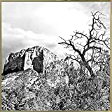 Mtn. Peak With Foliage B/W-HARLAN78298 Print 19''x19'' by Harold Silverman - Landscapes in a Gold Metal Frame