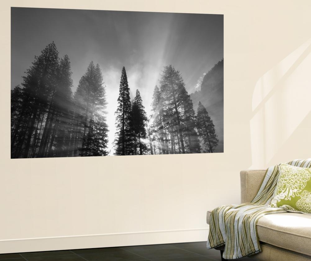 Sunlight Through Pine Forest in Yosemite Valley, Yosemite National Park, California, USA Wall Mural by Adam Jones 48 x 72in