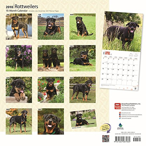 Rottweilers 2018 Wall Calendar Photo #3