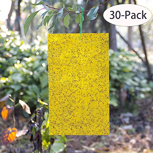 Kensizer 30-Pack Dual-Sided Yellow Sticky Traps for Flying Plant Insect Like Fungus Gnats, Whiteflies, Aphids, Leaf miners,Thrips, other Flying Plant Insects - 6x8 Inches, Twist Ties Included