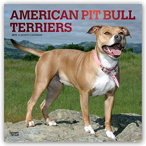 American Pit Bull Terriers 2019 12 x 12 Inch Monthly Square Wall Calendar with Foil Stamped Cover, Animals Dog Breeds