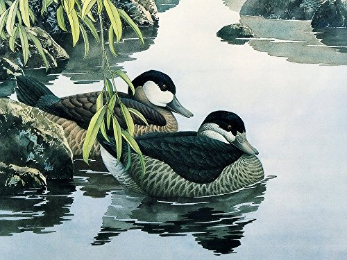 Colour Talk Diy oil painting, paint by number kit- Two Ducks 1620 (Ducks Oil Painting)