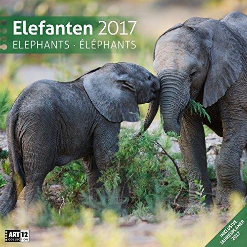 Elefanten 30 x 30 cm 2017