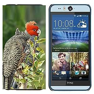 TECHCASE---Cubierta de la caja de protección para la piel dura ** HTC Desire Eye ( M910x ) ** --plumas pájaro rojo árboles naturaleza de primavera