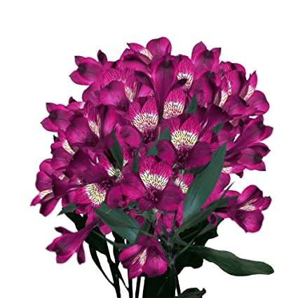 Amazon Com Globalrose Alstroemeria Flowers 120 Blooms Of Purple Peruvian Lily Fresh 30 Stems Of Flowers For Delivery Grocery Gourmet Food