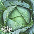 All Seasons Cabbage Seeds - 500 Seeds NON-GMO