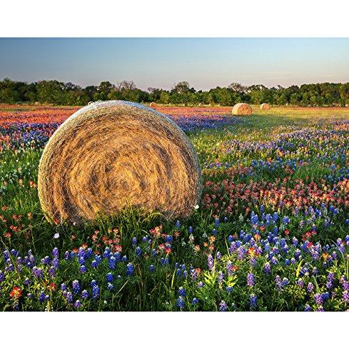 11x14 Texas Wildflower Photo,