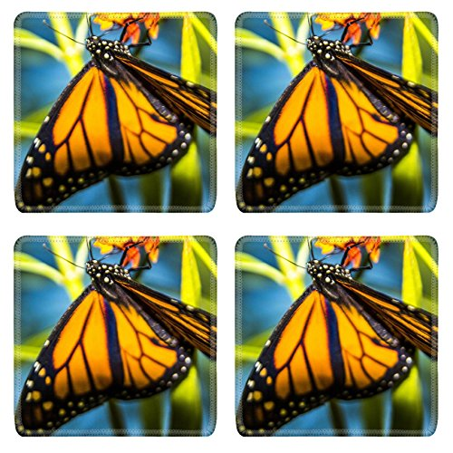 MSD Square Coasters Jackson County Fair 07252015 036 1 Natural Rubber Material Image 20000223129