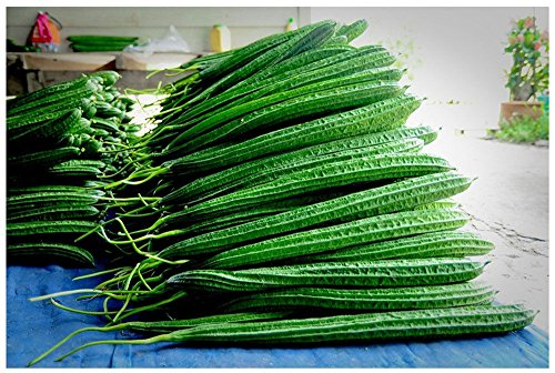 Angled Luffa Vegetable Loofah Sponges Chinese Okra 50 Fre...