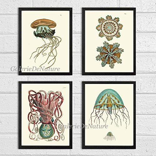 Jellyfish Coral Octopus Squid Sea Marine Nature Print Set of 4 Art
