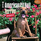 American Pit Bull Terrier Puppies 2015 Mini Wall Calendar by BrownTrout