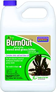 Bonide (BND7465) - Burnout Concentrate, Fast Acting Weed and Grass Killer (1 gal.),Multicolor,128 Oz