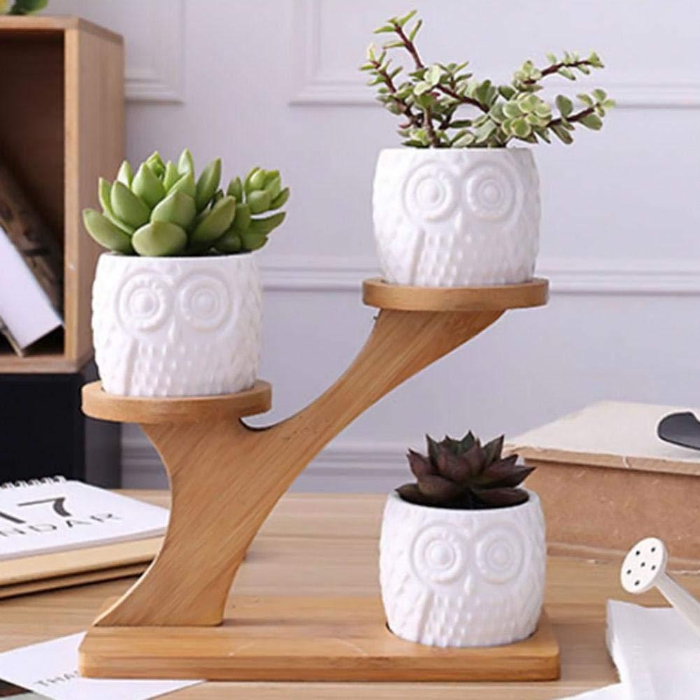 Cracklight 3 st/ücke Wei/ß Sukkulente Blumentopf Mit Bambus Regal dreischicht Tray Einfache Kreative Eule Muster Topf Pflanzer Set Home Office Kreative Ornament Ohne anlage