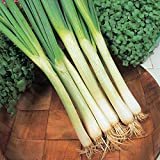 Onion (Spring) - White Lisbon (Winter Hardy) - 600 Seeds