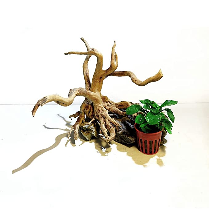 Pinzhi Wood Natural Trunk Driftwood Tree Acuario Tanque de Peces Decoración Ornamento (15-20cm): Amazon.es: Hogar