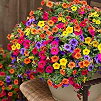 Colorful flowers in a container