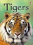 Beginners: Tigers (Usborne Beginners) (Beginners Series)