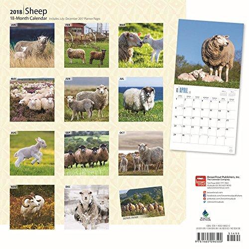 Sheep 2018 Wall Calendar Photo #3