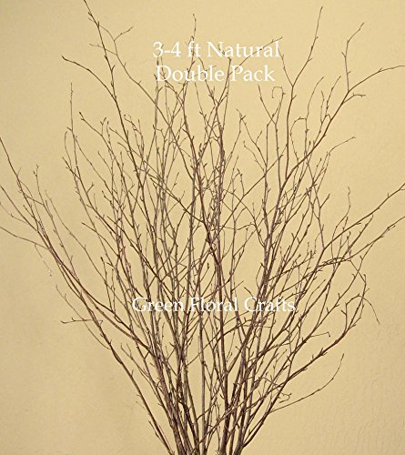 GreenFloralCrafts Natural Birch Branches (Pack of 30 Stems), 3-4', Natural Brown