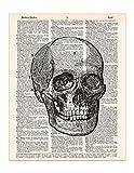 vintage textbooks - Vintage Skull Print, Medical Anatomy, Dictionary Page Art Print, 8x11 UNFRAMED