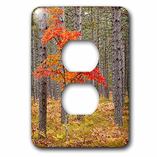 nt - Trees - Autumn Maple Tree in pine forest, Upper Peninsula, Michigan. - Light Switch Covers - 2 plug outlet cover (lsp_259487_6) ()