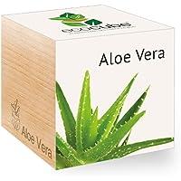 Feel Green Ecocube, Idée Cadeau (100% Ecologique), Grow-Your-Own/Kit Prêt-à-Pousser, Plantes Dans Des Cubes En Bois 7.5cm, Produit En Autriche