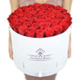 Real Roses that can Last A Year (X-Large, Red with Gift)