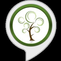 Entspannungsgeräusche: Wind in Bäumen