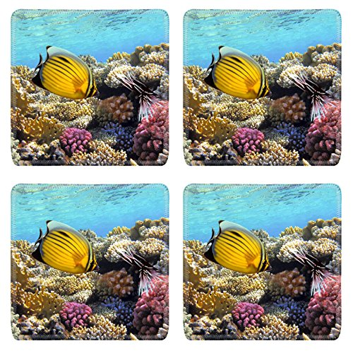 Liili Square Coasters IMAGE ID 12817435 Underwater life of a hard coral reef Red Sea Egypt