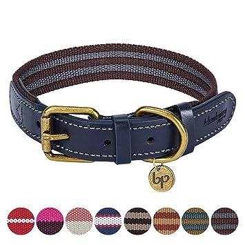 "lots of 12 3//4/"" dog collars"
