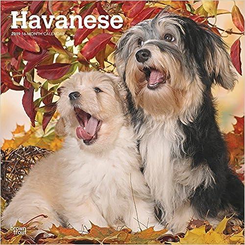 Havanese 2019 Calendar