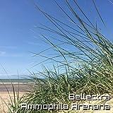 Ammophila Arenaria (Original Mix)