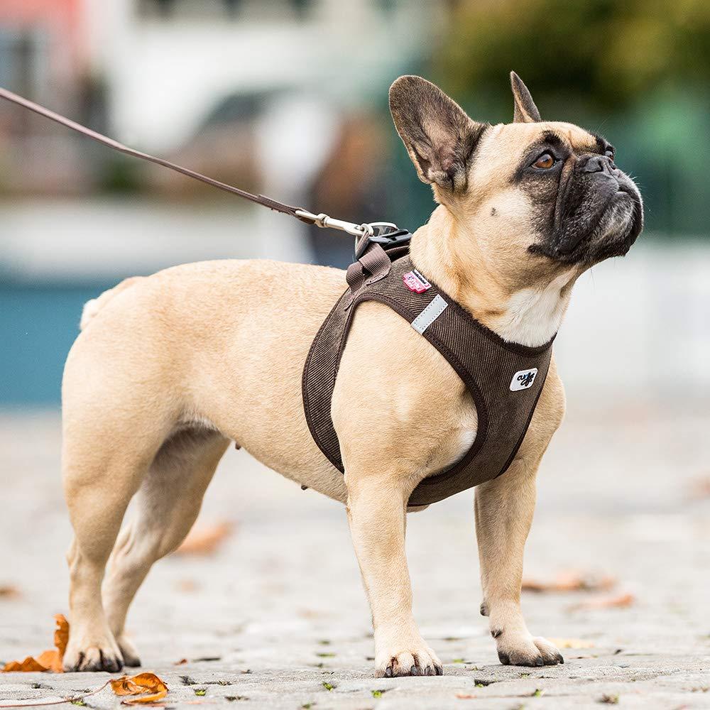 Curli arnés Chaleco cordón: Amazon.es: Productos para mascotas